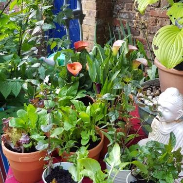 plantedpots